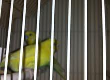 مجموعه من طيور الزينه