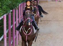 مجموعة خيول للبيع