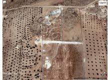 اراضي المفرق قرية الدجنية حوض تلعة الشجرة من المالك مباشرة