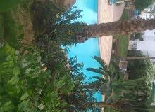 شقق للايجار اليومي داخل القري السياحية بشرم الشيخ موقع خليج نعمه