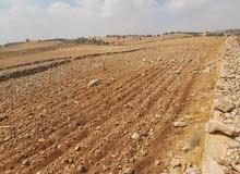 ارض في المفرق رحاب  مساحتها 27 دنم و 400 متر
