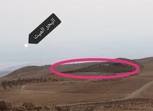 مزرعه مميزه في المشقر 12 دنم قرب الجامعه الالمانيه 150 الف كامله
