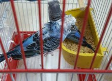 مجموعه طيور للبيع