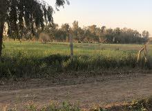 قطعة ارض زراعي