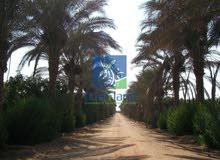 مزرعة زيتون للبيع بالقاهرة الجديدة