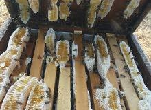 عسل السدر  للبيع