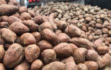 بطاطس مخصصة للقلي للبيع بالطن (فرصة ممتازة)