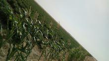 مزرعة للبيع علي طريق الفيوم الصحراوي