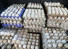 اي كميه بيض مخصب متوفر بالحجز