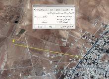 قطع زراعية قرية فقوع من أراضي القصر / الكرك