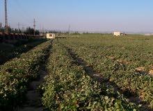 مزرعه 15 فدان بموقع مميز