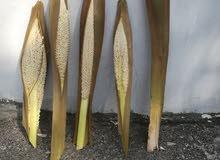 نبات  جديد