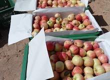 تفاح ميدلت