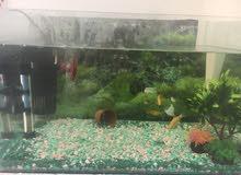 حوض سمك مع اسماك