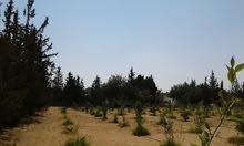 ارض للبيع وادي الربيع المظل