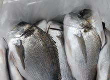 سمك طازج للبيع بالجملة
