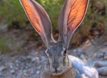 ابحث عن ارانب سيحيات نفس الي بصوره