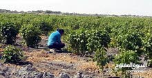 مزرعه مساحتها 15فدان للبيع الجاد والمعاينه ع الطبيعه
