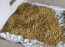 للبيع تمر برحي ممتاز مزارع العبدلي وبوجد خدمة توصيل