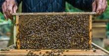 عسل ماجود انواع الموجود