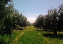 مزرعة للبيع بمنطقة سطات 8 هكتار