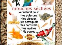 دود طبيعي مجفف للحيوانات الأليفة(سمك،طيور،دواجن...)
