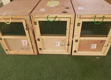بوكسات كلاب للبيع