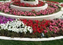 تنسيق حدائق و صيانتها