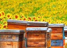 يوجد  جميع انواع العسل المصرى وتصنيع جميع مقاسات خلايا النحل وجميع مستلزمات المناحل