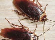 الضوء الذهبى لتنظيف المبانى ومكافحة الحشرات