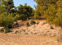 ارض مساحه   5 دونم و نص مكان خيال للبيع