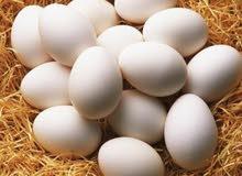 بيض مشكل للفقاسات