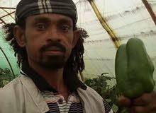 مزارع باحث عن عمل
