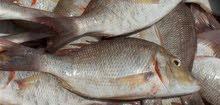 بيع الأسماك الطازجة والمجمدة