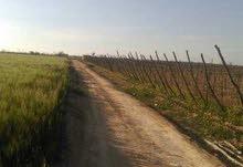 اراضي للبيع وباقل تقسيم 5 فدان ارض كاملة المرافق من مياه ري نيلي من الترعة مباشرة