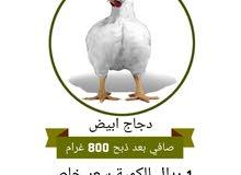 دجاج ابيض ... وسماد دجاج صافي