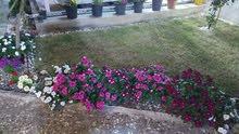 ترتيب وتنظيف الحدائق وباسعار مناسبة جداااا
