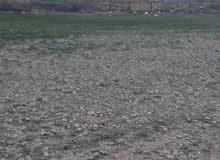 أرض زراعية بالمجمعه للأيجار السنوي