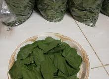 السلام عليكم يوجد لدينا ملوخية خضراء تقطيف حلو ونظيف جدا بأمكانا توفير اي كمية م