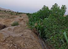 اراضي زراعيه مزروعه مسجله كامله المرافق