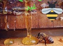 رمضان كريم والعسل بعرض كريم مع قطفة الربيع 2021