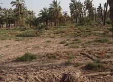 قطعة أرض زراعية