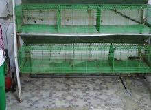 بطاريات ارانب للبيع