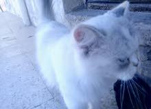 قط غير معروف النوع
