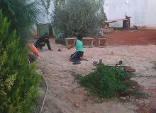 قطعة ارض 500 فى شبنه الرابش القديم مبنى عليها استراحه