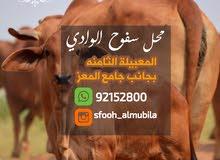 لحم بقر طازج من المزرعه الئ المحل