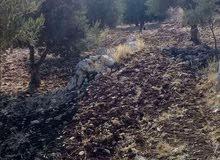 ارض زراعيه مزروعه زيتون ولوز في ( عجلون - اوصرة - جبل ابو الحمص )