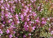 عسل حر طبيعي لسنة الكاملة ولمختلف العشوب والأزهار.