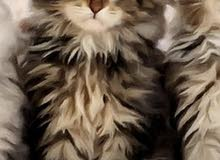 قطه حلوه