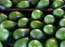 بيع الافوكادو المغربية avocado